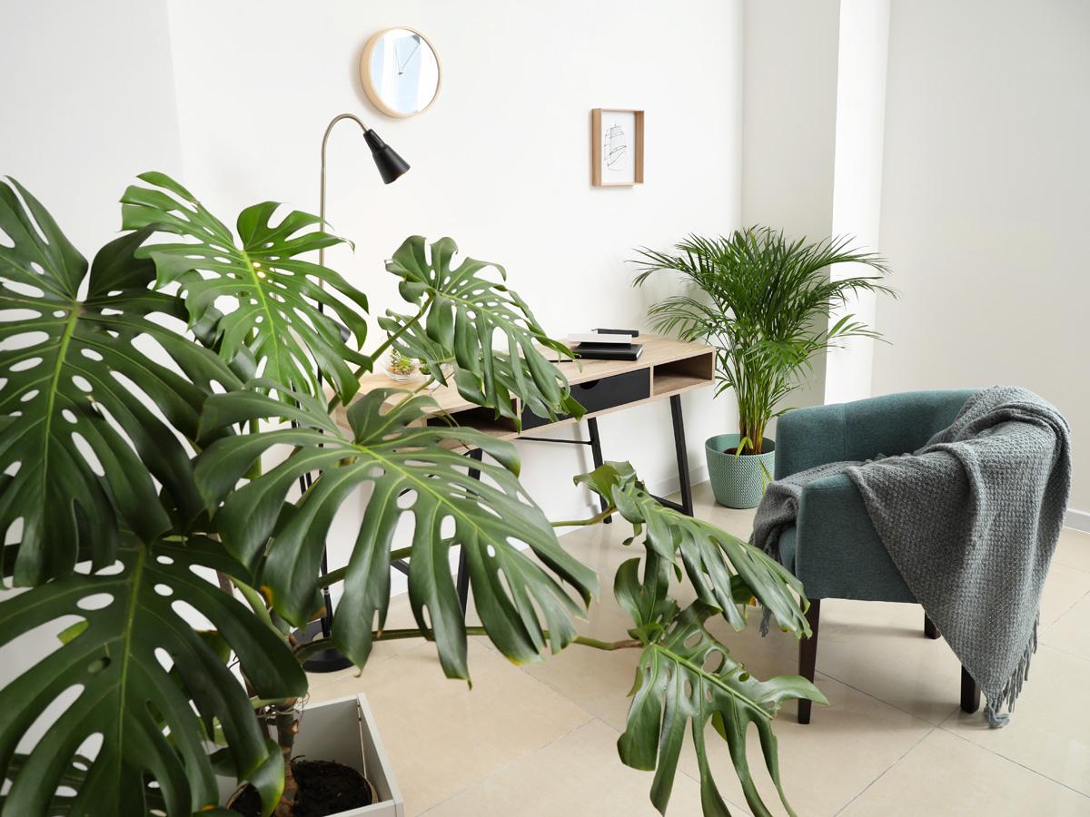 16 pflegeleichte Zimmerpflanzen  selbermachen.de