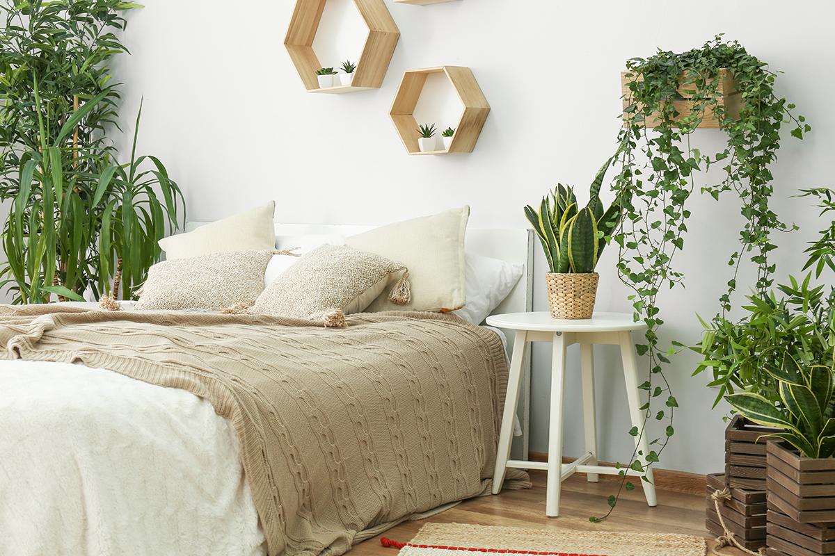 Die 17 besten Pflanzen fürs Schlafzimmer  selbermachen.de