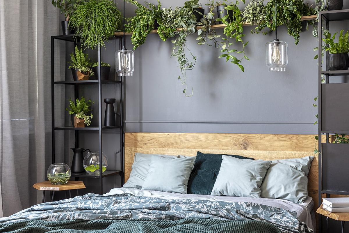 Die 15 besten Pflanzen fürs Schlafzimmer  selbermachen.de