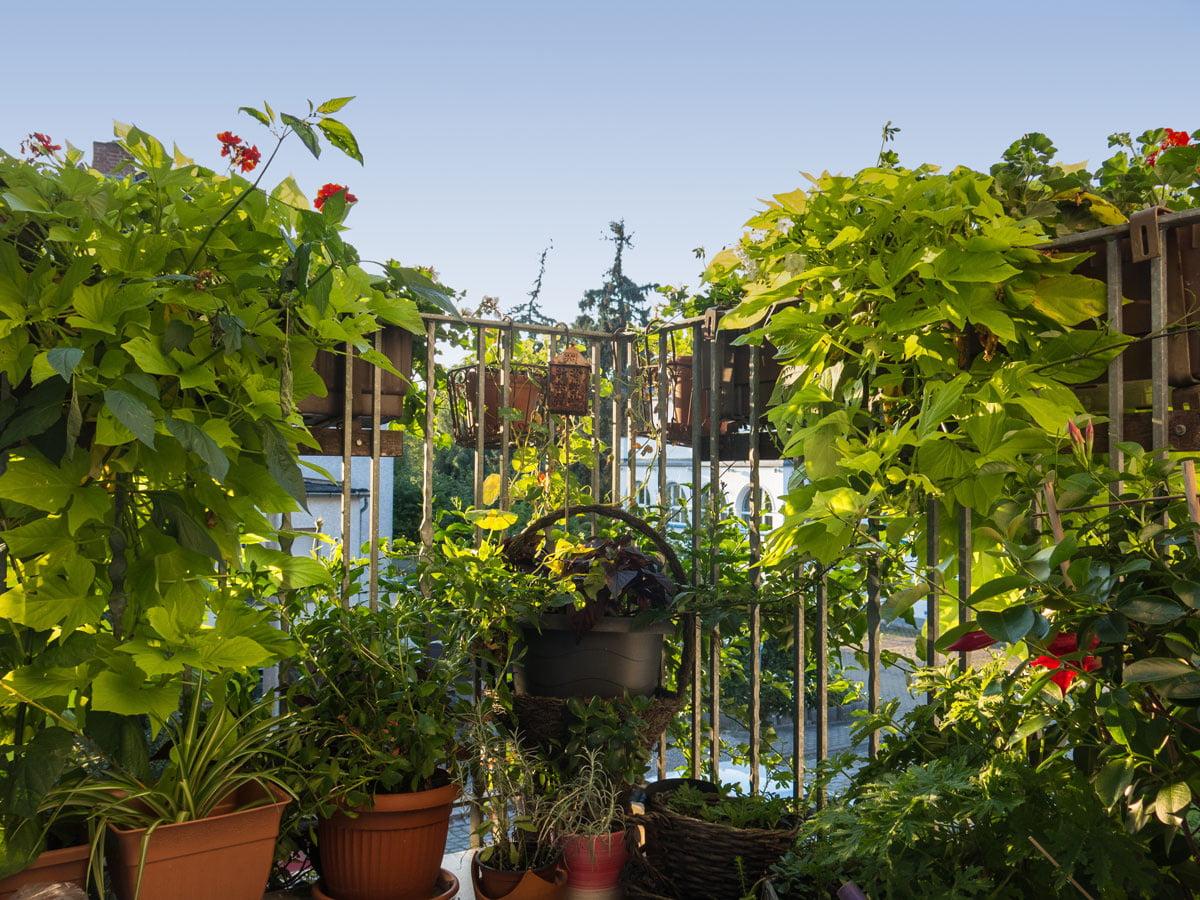 Die Richtigen Pflanzen Fur Den Balkon Selbermachen De