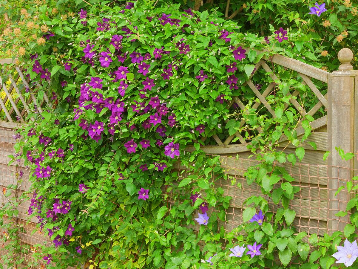 Sichtschutz Mit Kletterpflanzen Selbermachen De