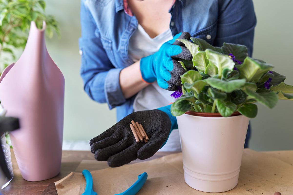 Welche Pflanze Stirbt Nach Ihrer Blüte