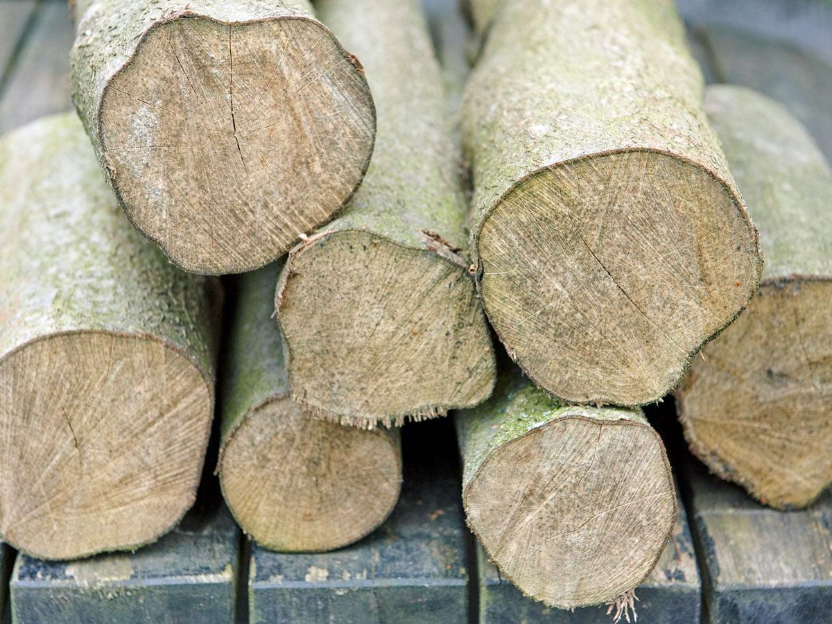 Wie Lange Muss Holz Trocknen : holz richtig trocknen dauer und lagerung ~ Watch28wear.com Haus und Dekorationen