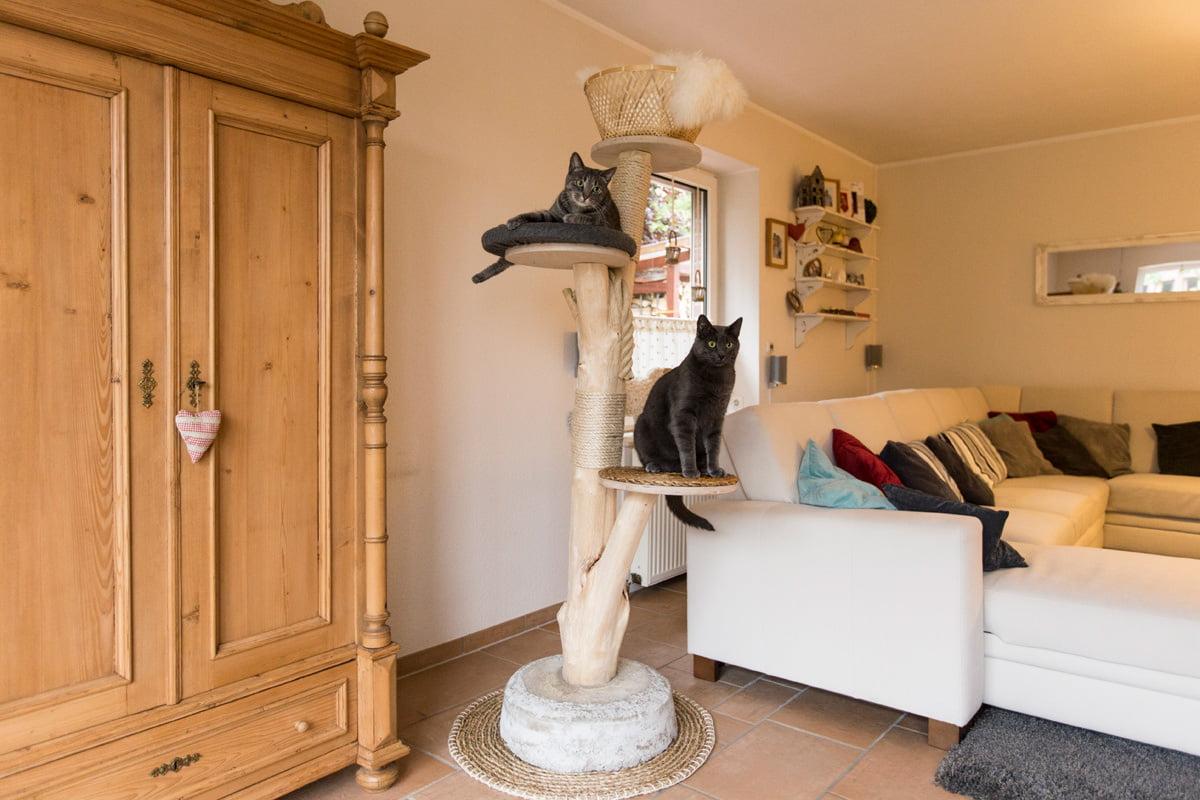 Kratzbaum für die Katze selber bauen: Anleitung ...